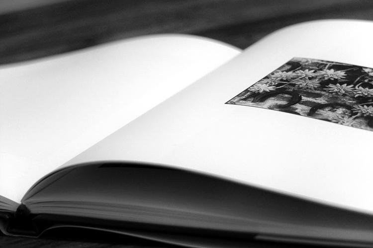 foto_libroOK